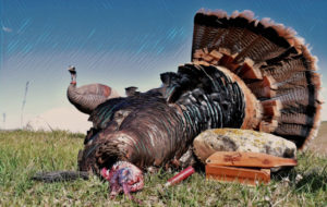 big-seans-turkey-calls